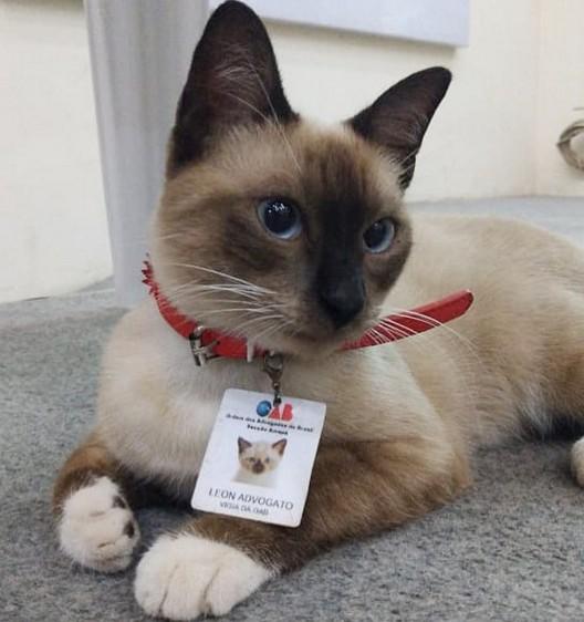 В Бразилии кот стал адвокатом