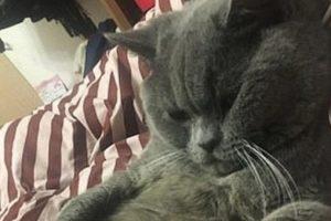 В Китае кот после ночи с пятью кошками попал под капельницу