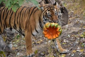 Как в Киевском зоопарке отмечают Хэллоуин