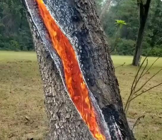 Дерево, в которое попала молния