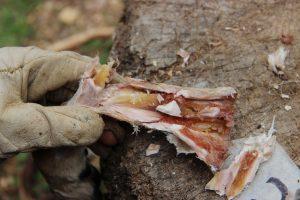 Древние люди консервировали еду 400 000 лет назад