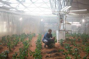 В Нидерландах собрали урожай на лунном и марсианском грунте