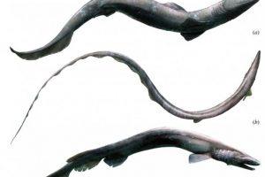 В Марокко обнаружили акулий скелет возрастом 360 млн лет