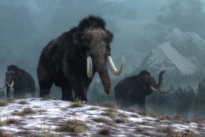 Шерстистые мамонты вымерли «всего» 4000 лет назад