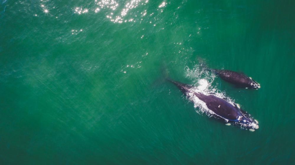 Как взвесить кита без весов? – исследование