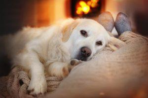 Собака снижает риск смерти хозяина на 24 процента