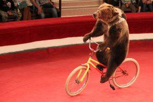 В России медведь напал на дрессировщика во время представления