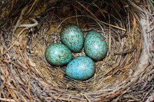 Биологи объяснили, почему птичьи яица разноцветные