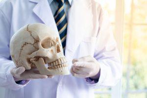 В черепах людей нашли золотое сечение