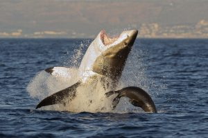 Во Французской Полинезии акула покалечила туристку