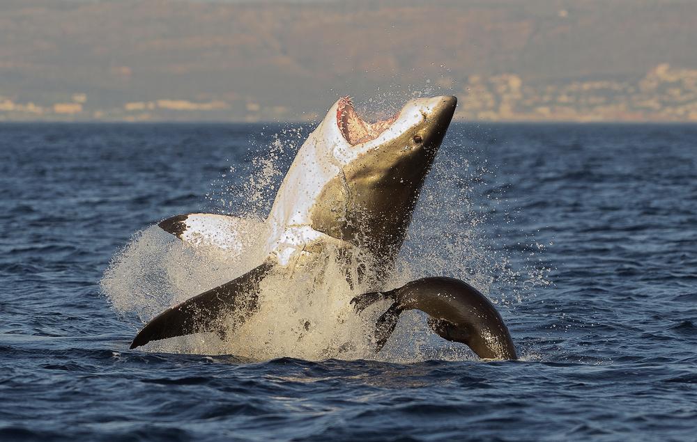 Во Французской Полинезии акула покалечила туристку.Вокруг Света. Украина