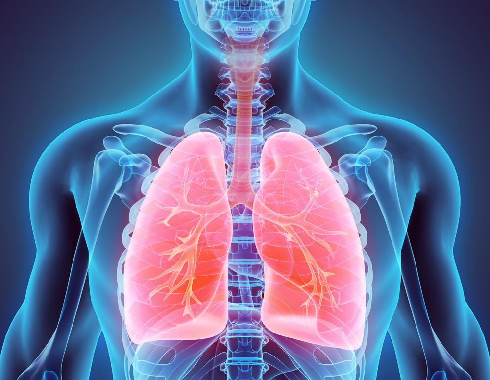 Жир в легких провоцирует развитие астмы – исследование.Вокруг Света. Украина