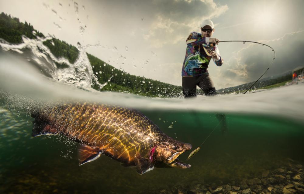 Рыбы чувствуют боль, как люди