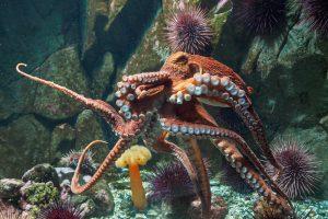 10 интересных фактов об осьминогах