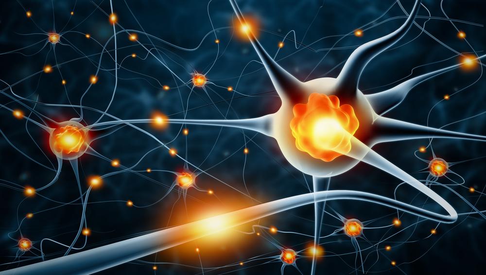 Чрезмерную активность мозга связали с сокращением жизни
