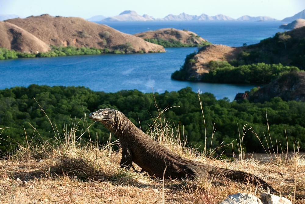 Индонезия передумала закрывать Комодо для туристов