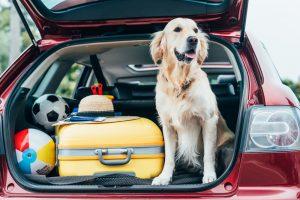 Британская компания предлагает работу путешественникам-собачникам