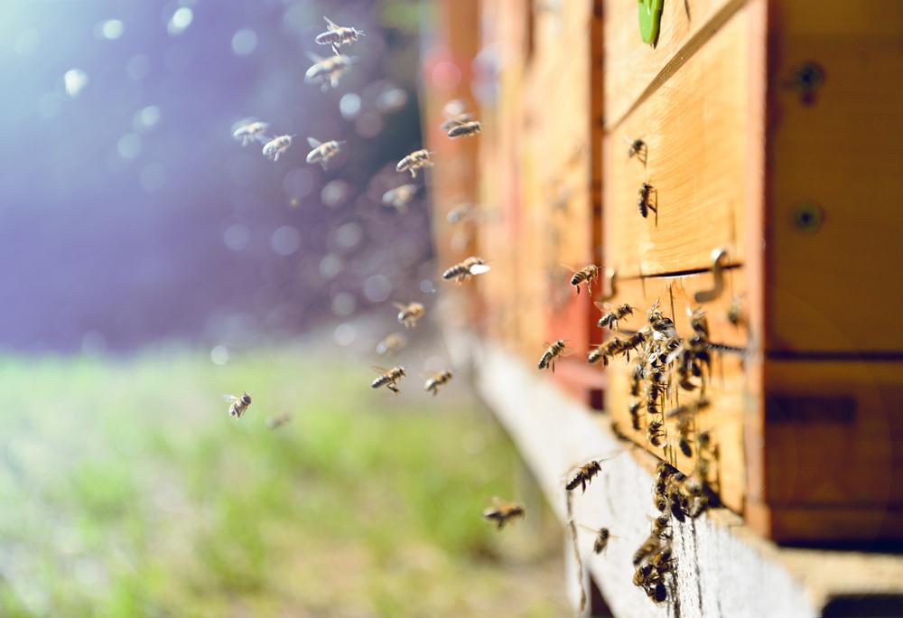 Пчелы недосыпают, ухаживая за потомством - ученые