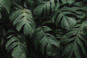 Lucien Ferrero: три способа передать силу и нежность