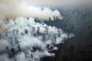 В Боливии ливни потушили лесные пожары