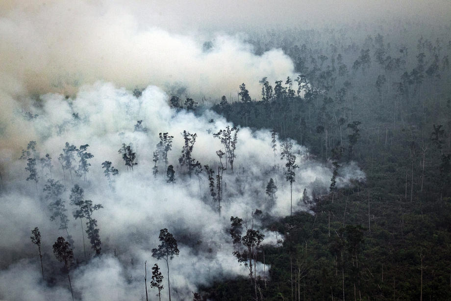 В Боливии ливни потушили лесные пожары.Вокруг Света. Украина