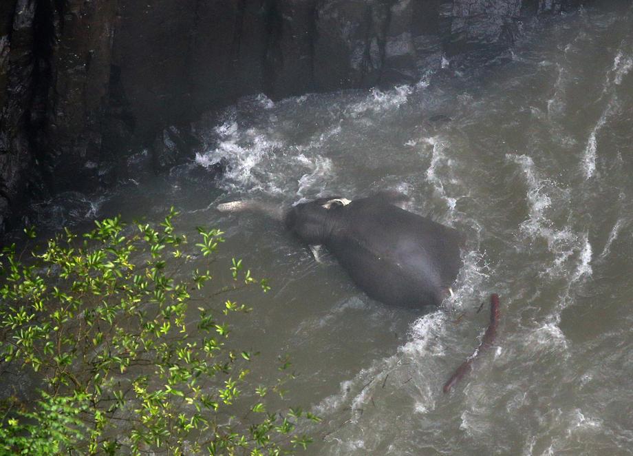 Гибель слонов в Таиланде: обнаружены еще пять тел
