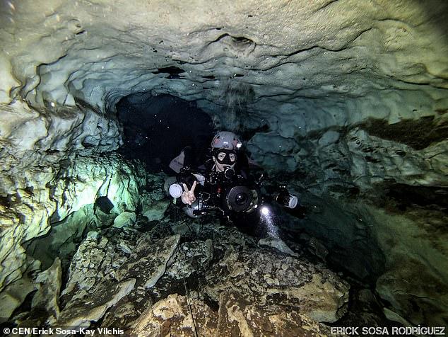 В Мексиканском заливе нашли зубы доисторических акул