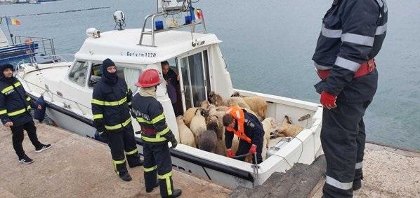 У берегов Румынии затонуло судно с тысячами овец