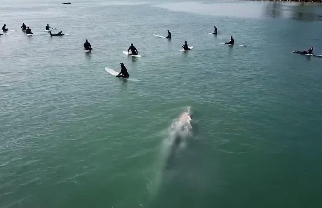 В Калифорнии случайно сняли встречу кита и серферов