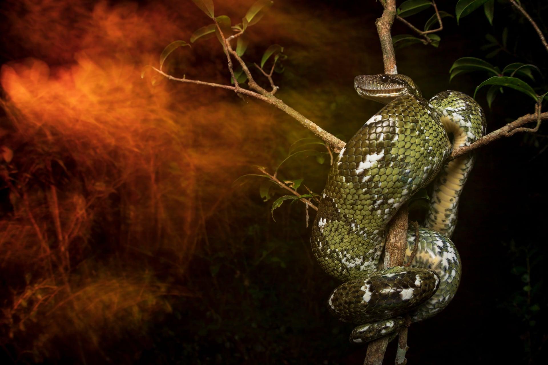Старейшее в мире экологическое общество выбрало лучшие фото природы 2019
