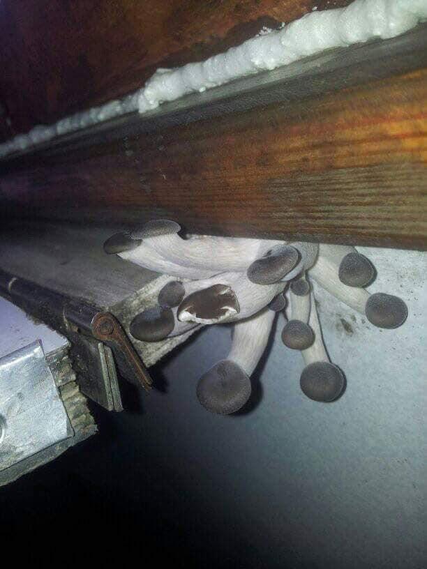 В вагоне Укрзализныци нашли грибы