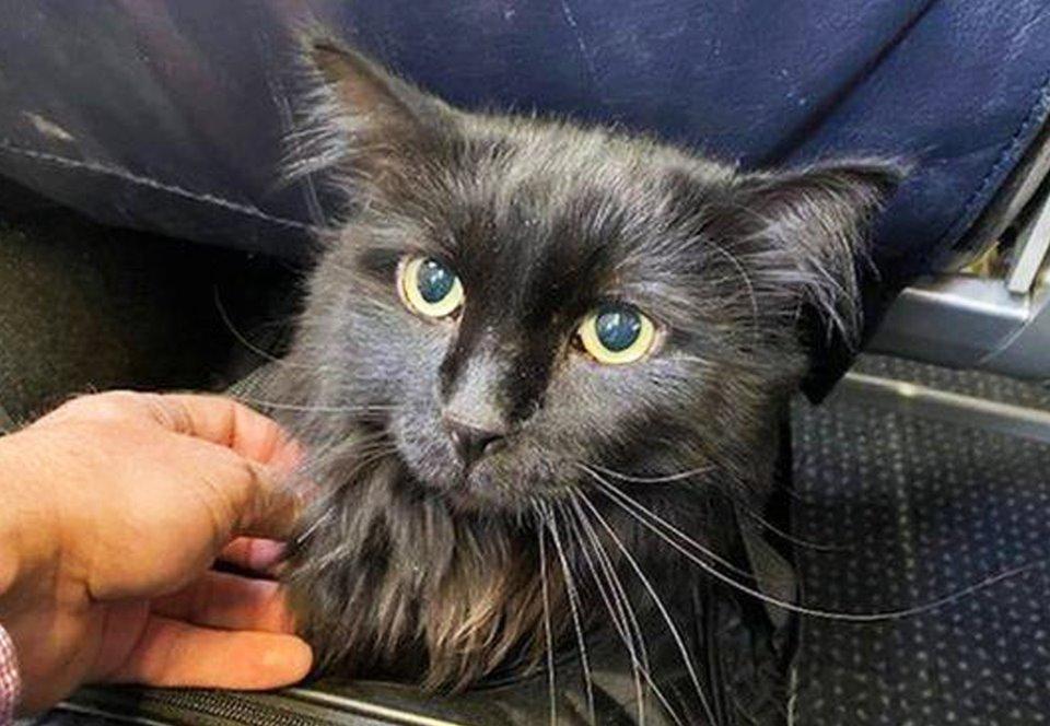 В США пропавший кот вернулся домой через пять лет