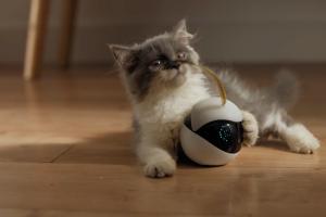 В Китае придумали робота для одиноких кошек