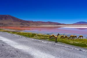 Город в небесах и дома в озере: 5 причин отправиться в Перу и Боливию