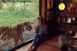 Львы, тигры и волки: британский отель селит с опасными соседями