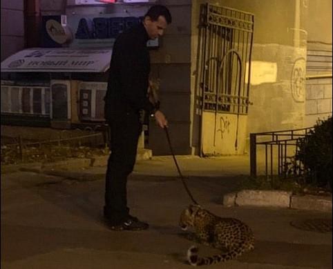 В Киеве зоозащитники ищут владельца леопарда