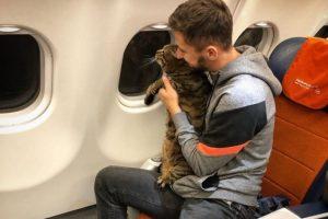 Российская авиакомпания наказала владельца толстого кота