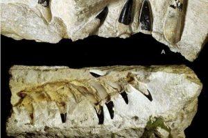 В Польше на кукурузном поле нашли останки плиозавра