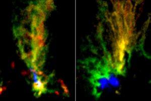 Телескоп ALMA запечатлел пару молекулярных облаков в соседней галактике
