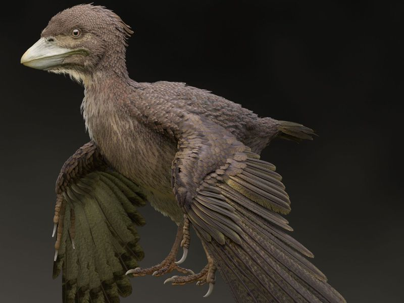 В Японии обнаружили окаменелости птицы, из-за которой придется переписать историю эволюции