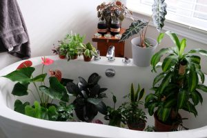 Комнатные растения бесполезны для очистки воздуха
