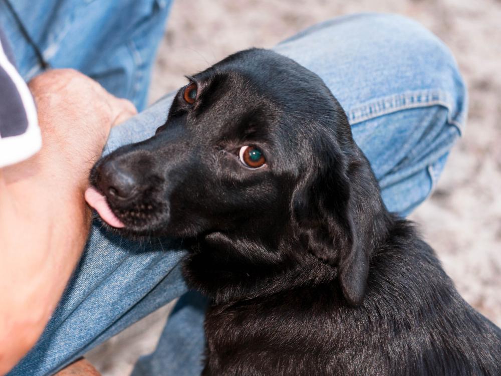 Житель Германии умер после того, как его лизнула собака