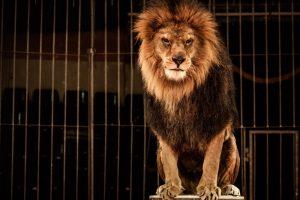 В Словакии запретили диких животных в цирках
