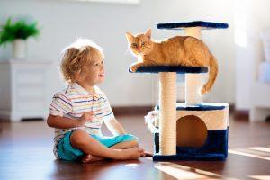 Ученые рассказали, как обеспечить счастливую жизнь домашней кошке