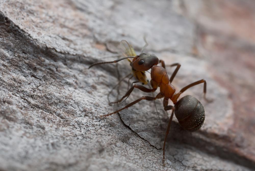 В заброшенном польском бункере обнаружили колонию муравьев-каннибалов.Вокруг Света. Украина