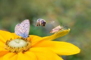 За 10 лет в  Германии исчезло больше половины насекомых