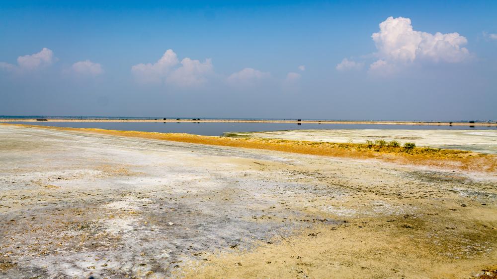 На берегу озера в Индии найдены тысячи мертвых птиц