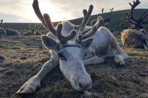 «Вечный лед» северных монгольских степей начал таять: страдают животные и люди