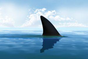 В Израиле акула напала на отдыхающего