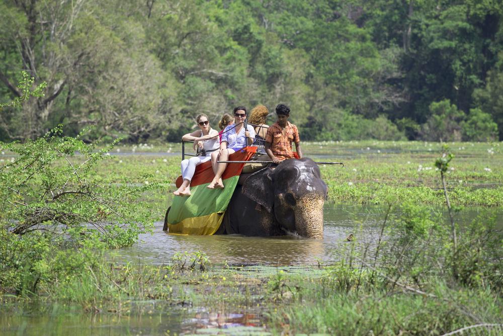Туристы до смерти заездили молодого слона.Вокруг Света. Украина